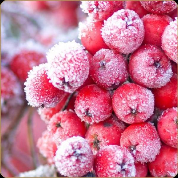 Dark Burner Red Frosty Fruit 10ml